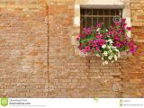 Blossoms On the Bricks Pink and White Petunia Flowers On the Windowsill Of A