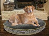 Bolster Dog Bed Costco Costco Dog Bed Custom Costco Uk Kirkland Signature X