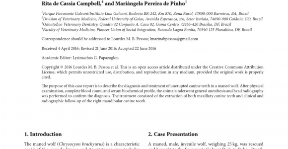Canine tooth Extraction aftercare Pdf Extraction Of Unerupted Maxillary Canine Teeth In A Maned Wolf
