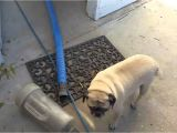 Carpet Cleaning Loganville Ga Truman Steemers Carpet Cleaning Loganville Ga Youtube