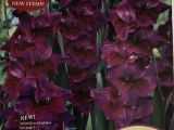 Celebrating Home Catalog 2019 60 Free Seed Catalogs and Plant Catalogs