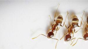 Critter Getter Pest Control Az Critter Gitters