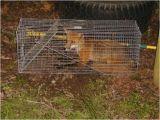 Critter Gitter Pest Control Inc Critter Gitter In Crewe Va Pest Control Yellow Pages