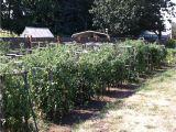 Dallas Craigslist Farm and Garden by Owner fort Smith Farm Garden by Owner Craigslist Autos Post