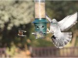 Dove Proof Bird Feeders 2009 12 19 195 V1 London Holland Park Pigeon Chasing