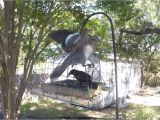 Dove Proof Bird Feeders Pigeon Dove Proof Bird Feeder Youtube