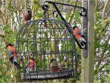 Dove Proof Bird Feeders the Bird Cage Anti Squirrel and Pigeon Proof Bird Feeder