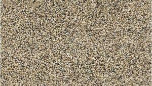 Dreamweaver Polyester Carpet Reviews Dreamweaver Polyester Carpet Reviews Www Resnooze Com