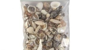 Edible Seashells Hobby Lobby Natural Seashell assortment