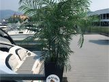 Fake Palm Trees for Sale Indoor 6 5 Foot areca Silk Palm Tree Uv Artificial Palms Pinterest