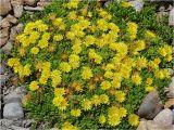 Florist Highlands Ranch Co Denver Photo Journal Summer Time Flowers Week 1