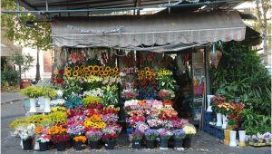 Floristerias En San Salvador Youtubetaller Gratis Floristeria Floristeria En San