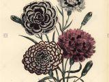 Flower Shops In Stoughton Ma Mrs St John Stockfotos Mrs St John Bilder Alamy