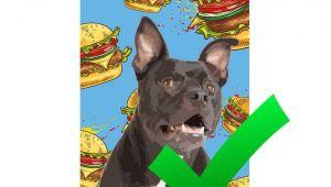 Free Dating Sites for Animal Lovers Dog Art Cat Art Custom Pet Pop Art Pop Your Pup