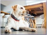 Good Flooring for Dog Owners Best Type Of Flooring for Pet Accidents Flooring Home