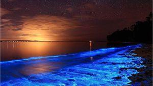 Grand Cayman Bioluminescence tour Australian Sunset Illuminated with the Blue Glow Of Bioluminescent