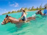 Grand Cayman Bioluminescence tour What It S Like to Ride Swimming Horses In Grand Cayman Cayman