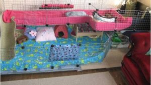 Guinea Pig Cage Store Coupon 17 Best Images About Guinea Pig On Pinterest Cowlick