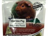 Guinea Pig Chew toys Amazon Amazon Com Sherwood Pet Health Recovery Food for Guinea Pigs Sarx