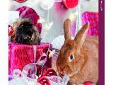 Guinea Pig toys Amazon Uk Trixie Advent Calendar for Small Animals Amazon Co Uk Pet Supplies