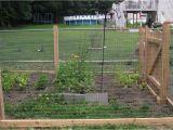 Hog Panels Rural King Hog Fence Panels Rural King Fences Design