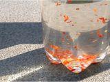 Homemade Bird Repellent Spray How to Make Homemade Bird Repellent Spray with Pictures