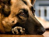 How to Euthanize A Dog with Sleeping Pills when is It Okay to Euthanize A Pet Rover Blog