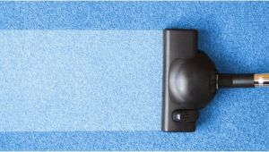 Kiwi Carpet Cleaning Bluffton Sc Carpet Cleaning Bluffton Sc Floor Matttroy