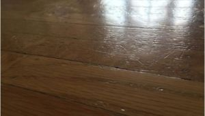 Laminate Flooring with Big Dogs Does Laminate Flooring Scratch Easily From Dogs Gurus Floor