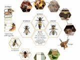 Lifespan Of A Bee Lifecycle Of A Honey Bee Science Bugs Spiders