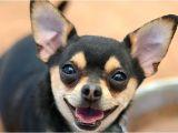 Low Cost Pet Euthanasia Houston Low Cost Pet Euthanasia Houston Dannyobrienqb Com