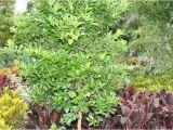 Mcminnville Tn Nurseries Retail Local Nurseries Plants Trees wholesale thenurseries