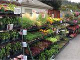 Mcminnville Tn Nurseries Retail Plant Nursery wholesale thenurseries