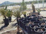 Native Plant Nursery El Paso A Unique Local Nursery It 39 S A Dry Heat