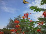 Native Plant Nursery El Paso Group Plans Meeting to Promote Native Plants In El Paso