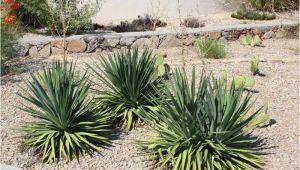Native Plant Nursery El Paso why Native Plants El Paso County Master Gardeners