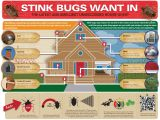 Orkin Pest Control Rockford Il Stink Bugs Brown Marmorated Stink Bug Control Prevention
