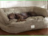Orvis Anti Chew Dog Bed Outstanding tough Chew Dog Bed tough Chew Dog Bed orvis