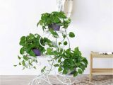 Outdoor Plant Stands at Walmart Hlc 3 Tier Metal Plant Stand Garden Patio Flower Pot Rack Modern S