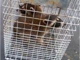 Pest Control Davenport Ia Ace Pest Management Inc Pest Control Davenport Ia