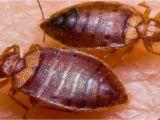 Pest Control Hot Springs Ar Hot Springs National Park Ar American Termite and Pest