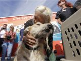 Pet Supplies Beaumont Tx Nearly 60 Photos Of Animals Being Rescued From Harvey Flooding