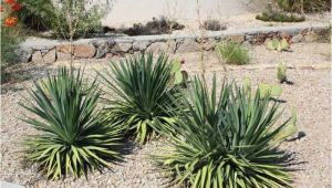 Plant Nursery El Paso why Native Plants El Paso County Master Gardeners