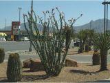 Plant Nursery In El Paso Tx El Paso Landscaping
