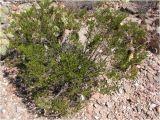 Plant Nursery In El Paso Tx Native Flora In El Paso Cactiguide Com