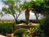 Plant Nursery In El Paso Tx Palm Tree Yuca Plants and El Paso Tx by Sharphotography