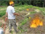 Red Dragon Flame Weeder Untitled Document Www Liseed org