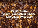 Servpro Cigarette Smoke Removal Wet Leaves Cause Mold Servpro National Images Pinterest Water
