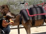 The Living Desert Coupons 2019 Camels Living Desert Zoo and Gardens Ancora Store