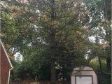Tree Service Kettering Ohio Dayton Tree Service Springboro Ohio Oh Localdatabase Com